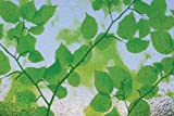 Linea Fix para ventanas GLS 4654 de hojas de tamaños de línea de 46 cm de alto, plástico, verde,...