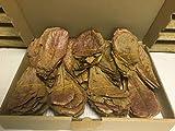 200 Gramm NANO Seemandelbaumblätter (ca.200Stück 10cm) original A-Markenware von catappa-leaves +++BLITZVERSAND+++