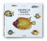 Samuel Fallours. Tropical Fishes of the East Indies