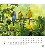 Freche Wellensittiche Postkartenkalender – Kalender 2017 - 8