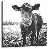 Einzelne Kuh auf Butterblumenwiese in der Abendsonne Kunst B&W, Format: 40x40 auf Leinwand, XXL riesige Bilder fertig gerahmt mit Keilrahmen, Kunstdruck auf Wandbild mit Rahmen, günstiger als Gemälde oder Ölbild, kein Poster oder Plakat