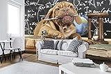 DekoShop Fototapete Vlies Tapete Moderne Wanddeko Wandtapete Lehrer Hund AMD10430VEXXL VEXXL (312cm. x 219cm.)