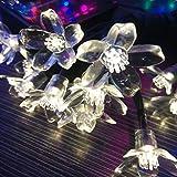 ledmomo 50LED stringa solare Luci all' aperto bocciolo di ciliegio Fiore Luce impermeabile (luce bianca pura)