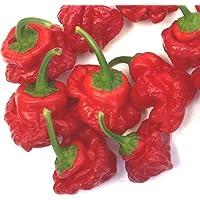 Portal Cool Jamaicana Red Scotch Bonnet Chilli - Una calabaza Hermosa forma extrema del chile picante