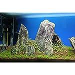 Aquarium Rock Fish Tank Decoration Slate 100% Natural Ideal For Caves WOOD STONE 10kg Set 12