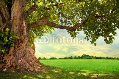 alu-dibond-bild-30-x-20-cm-spring-meadow-with-big-tree-with-fresh-green-leaves-bild-auf-alu-dibond