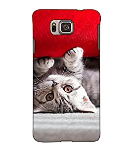 Fuson Designer Back Case Cover for Samsung Galaxy Alpha :: Samsung Galaxy Alpha S801 :: Samsung Galaxy Alpha G850F G850T G850M G850Fq G850Y G850A G850W G8508S :: Samsung Galaxy Alfa (A Cute Kitten Play)