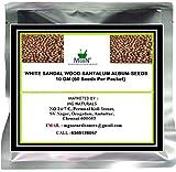 #3: WHITE SANDAL WOOD-SANTALUM ALBUM-SEEDS-10 GM (60 Seeds Per Packet)