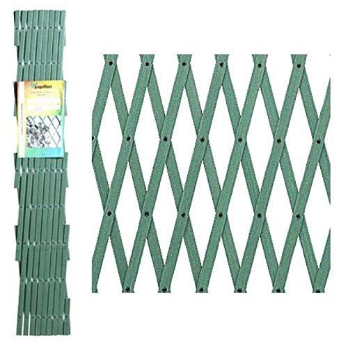 Papillon 8091555 Celosia PVC Verde Extensible 4x1 Metros.