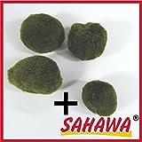 Mooskugel ca 3-5cm,Mooskugeln,Moosball Sahawa® 3+1 Gratis Wasserpflanzen,Aquarium-Deko