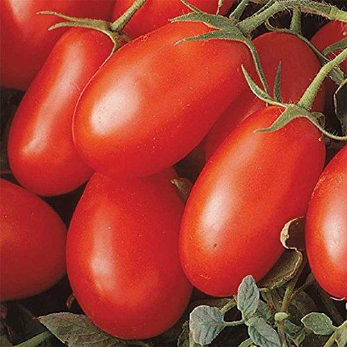 Go Garden 10 - Graines: La Roma Iii Red Hybrid Graines de tomate - produit des cultures abondantes! Résistant aux maladies