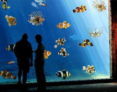 (Fenstersticker No.390 Tropical Fishes Set Fische Wasser Meer Süßwasser Nemo Fenstersticker Fensterfolie Fenstertattoo Fensterbild Fenster-Deko Fensteraufkleber Fensterdekoration Glas-Sticker Größe: 40cm x 40cm)