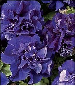 Fiore - Petunia - Double Pirouette Blu - 30 Semi Pellettati