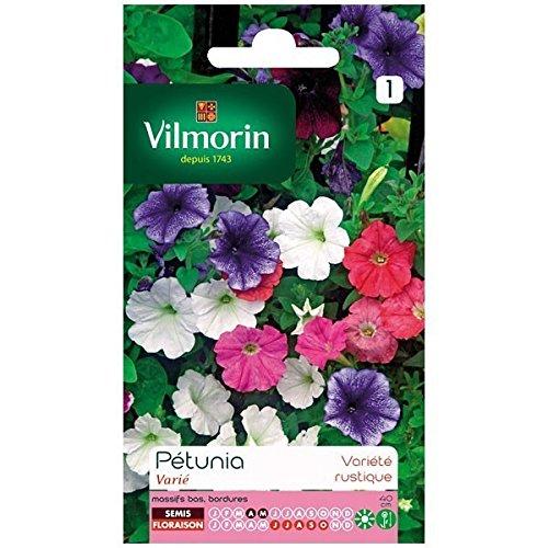 Vilmorin - Sachet graines Pétunia varié