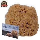 Natural Sea Sponge Sea Nature Marke 12,7–15,2cm Honeycomb Typ für Körper Bad und Gesicht Reinigung ideal für Baby Baden–robust und langlebig garantiert