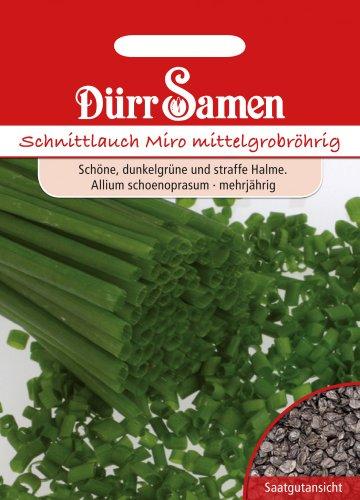 Dürr Samen 0166 Schnittlauch mittelgrobröhrig (Schnittlauchsamen)