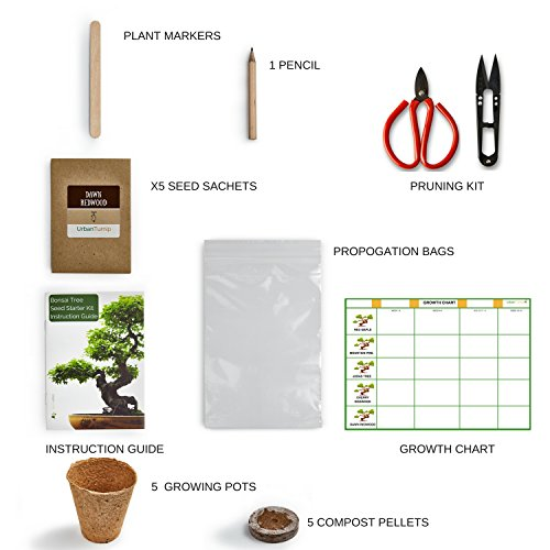 Bonsai Tree Kit Grow Your Own Bo...