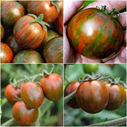 Organic Super Healthy Antioxidant-Rich Black Zebra Cherry Tomato 25 Seeds