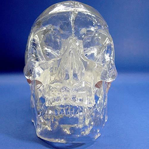 WHYIT Modelo de Calavera del Cuerpo Humano Totalmente Transparente articulaciones óseas y Otros 22 sitios Desmontables Peso del Producto 5 kg Hecho a Mano Puro