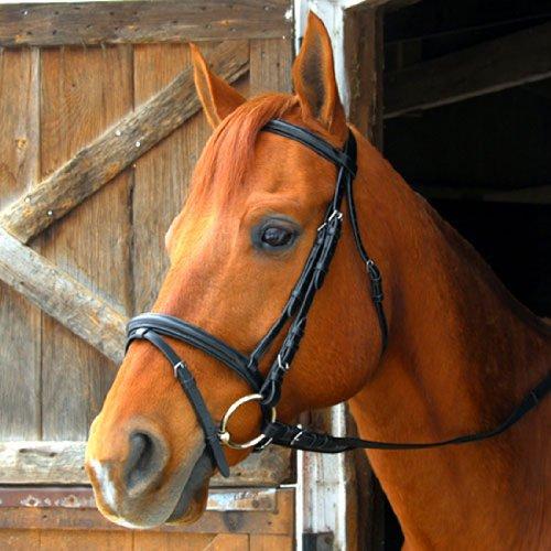 Exselle Dressur/Vielseitigkeit Trensenzaum, Pony -