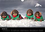 Dackel aus Schleswig-Holstein (Wandkalender 2018 DIN A4 quer): Dackel aus Schleswig-Holstein (Monatskalender, 14 Seiten ) (CALVENDO Tiere) [Kalender] [Apr 01, 2017] Leirich, Monika - Monika Leirich