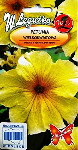 Semillas amarillas de Petunia - Petunia x hybrida grandiflora
