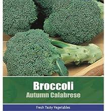 Gratis Broccoli Otoño Calabrese Vegetal Planta 175 Semillas