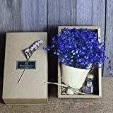 Decor Flower, Toamen Beautiful Gypsophila Natural Dried Flower Baby's Breath Home Decor Dried Flower Sky Star (Blue)