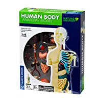 Thames & Kosmos 260830 Anatomy Model, 37 Parts with Stand and Guide Book, Build Your own Human Body, Nature Discovery Range, Ages 8 to Adult, Multi