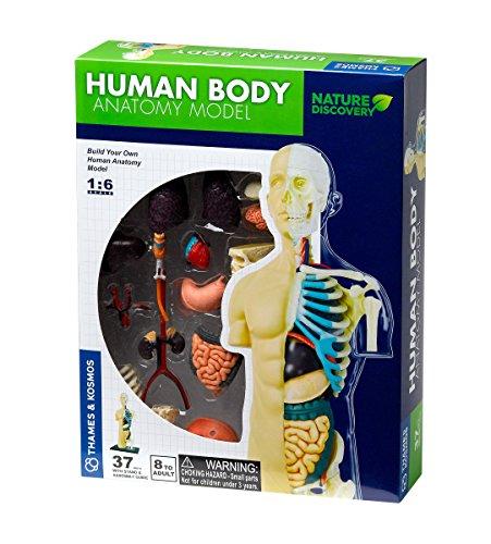 Thames & Kosmos 260830 Juguete Modelo anatomía de Cuerpo Humano, Multi