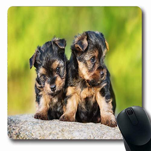 Luancrop Mousepads Fur Green Puppy Zwei kleine Yorkshire Terrier Welpen Wurf Yorkie Natur Cute Adorable Baby Breed rutschfeste Gaming Mouse Pad Gummi-Matte -