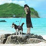 ThinkPet ComfortPro Hundegeschirr Leine Set Heavy-Duty Polyester Leine & verstellbares Geschirr für kleine mittelgroße Hunde Walking/Wandern, EINWEG Verpackung