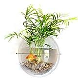 Acuario transparente Acrílico montado en la pared Colgante del acuario de Fish Bowl para peces dorados y jarrones de plantas de peces Beta Decoración para el hogar Olla, 29,5 centímetros de diámetro