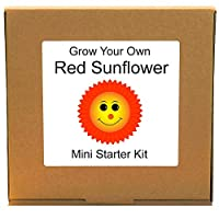 Grow Your Own Red Sunflower Plant Growing Kit - Unusual, Unique and Quirky Complete Beginner Friendly Indoor Gardening Gift for Men, Women or Children