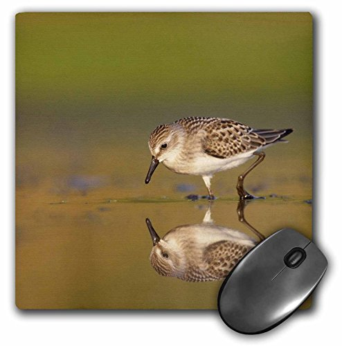 Jamaica Bay (Danita Delimont - Birds - New York City, Jamaica Bay Refuge, Sandpiper bird - US33 BJA0045 - Jaynes Gallery - MousePad (mp_93056_1))