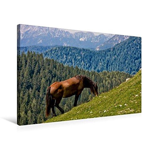 Premium Textil-Leinwand 75 cm x 50 cm quer, Ein Motiv aus dem Kalender Kärntens Natur   Wandbild, Bild auf Keilrahmen, Fertigbild auf echter Leinwand, Leinwanddruck (CALVENDO Natur)