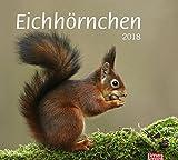 t&m Eichhörnchen Bildkalender - Kalender 2018