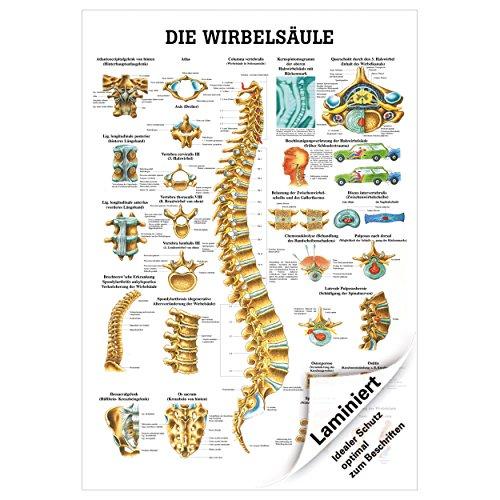 Die Wirbelsäule Lehrtafel Anatomie 100x70 cm medizinische Lehrmittel