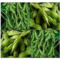 Japonés Edamame semillas ~ ~ de soja puf de Bean Alta en Proteínas–-Jóvenes de soja–80–90días