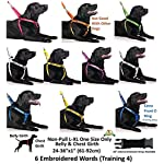 NERVOUS (Give Me Space) Yellow Colour Coded 60cm 1.2m 1.8m Neoprene Padded Handle Dog Leads PREVENTS Accidents By… 16