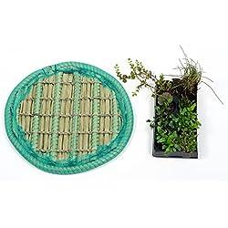 KOIPON Pflanzinsel inkl. 8 winterharten Teich-Pflanzen, rund, 45 cm – schwimmende Teichinsel mit Teichbepflanzung – Algen reduzieren in Koi-Teich durch Schwimmpflanzen auf Pflanzeninsel
