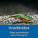 AQ4Aquaristik Triops australiensis Ayers Rock (grün) - Urzeitkrebse - ca. 100 bis 250 Triops Eier - mit Anleitung - RARITÄT