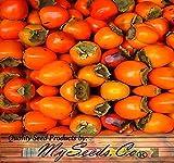 Portal Cool Pkt Größe: Japanese Persimmon - Diospyros Kaki Seeds - Very High Beta-Carotin Gehalt