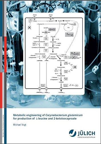 Metabolic engineering of Corynebacterium glutamicum for production of L-leucine and 2-ketoisocaproate