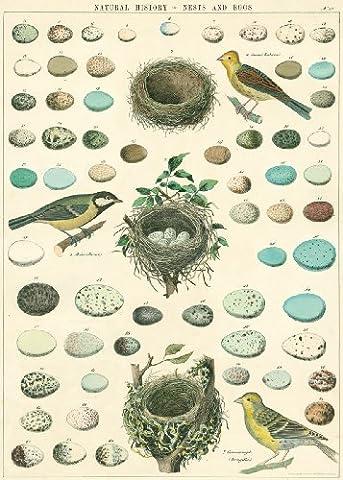 Cavallini Papers & Co Papier cadeau Motif oiseaux, nids et œufs