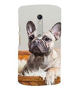 Famous Dog 3D Hard Polycarbonate Designer Back Case Cover for Motorola Moto G3 :: Motorola Moto G (3rd Gen)