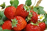 #6: Seedscare Fruit Seeds Strawberry Alpine Fragaria (Pack of 30)