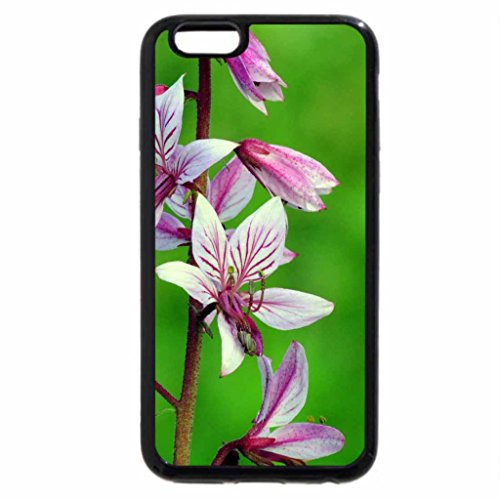 iPhone 6S / iPhone 6 Case (Black) my name is miss muffett