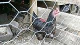Chicken Wire rotolo 1.2mx50m.Rete a maglia in acciaio galvanizzato 25mm foro.Recinzione da giardino. Circa 1,2m di altezza. Chicken Wire, gabbie, recinti per animali domestici, cani, limite recinzione, recinzioni, pollame recinzione da giardino, Aviaries. Filo di acciaio zincato