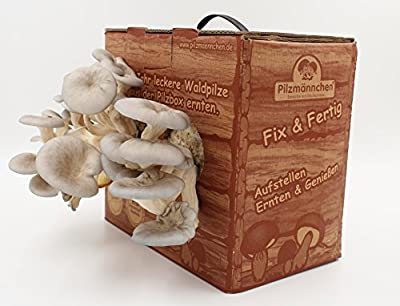 Pilzmännchens Austernpilz Bio Pilzzuchtbox von Pilzmännchen auf Du und dein Garten